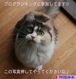 081129pochi.jpg