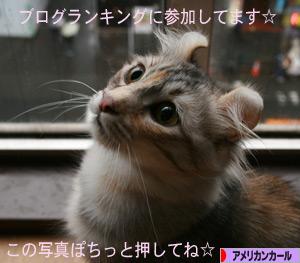 081204pochi.jpg