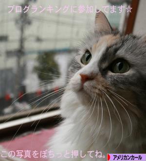 081213pochi.jpg