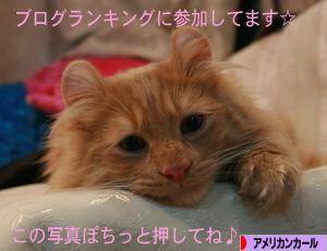081229pochi.jpg