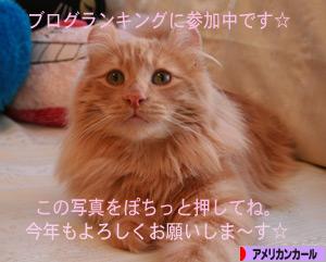 090104pochi.jpg