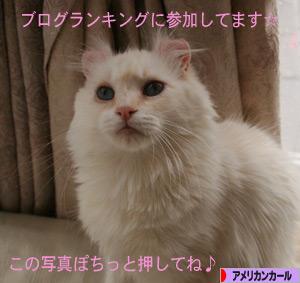 090122pochi.jpg