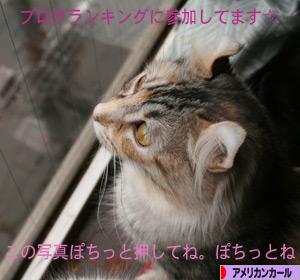 090129pochi.jpg