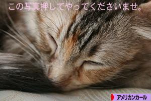 090317pochi.jpg