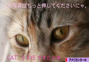 090324pochi.jpg