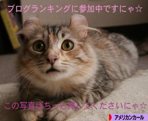 090328pochi.jpg
