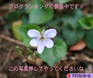 090415pochi.jpg