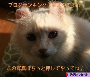 090424pochi.jpg