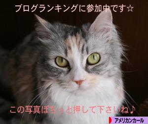 090523pochi.jpg