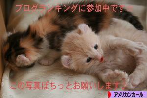 090529pochi.jpg