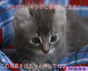 090611pochi.jpg
