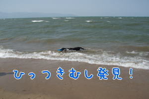 image305.jpg