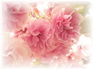 これは桜??