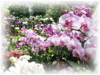 たくさんの蘭の花