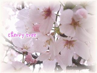 桜~ヽ(*^ω^)ノ♪