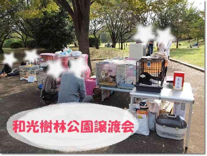 1wakoujyurinn20111003.jpg