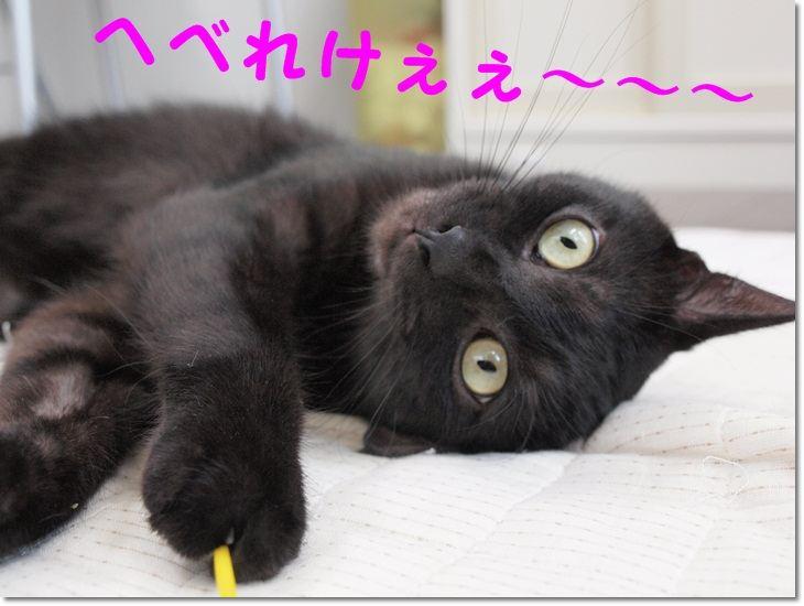 1yooparairuiboss20111230.jpg