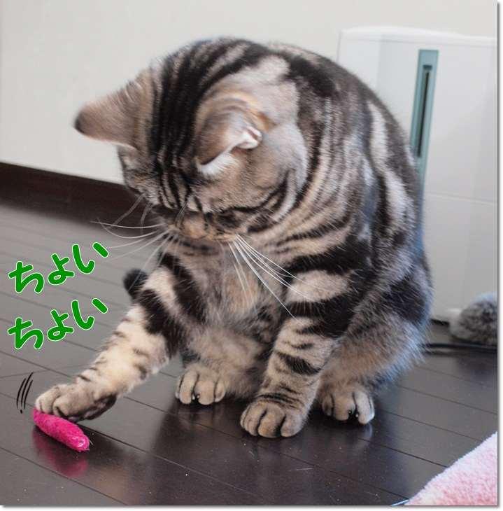 1nayamuoyajikorokoro20120306 (2)
