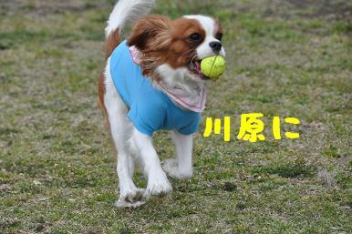 20090404_川原_02