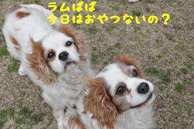 20090404_川原_09