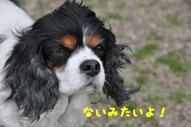 20090404_川原_10