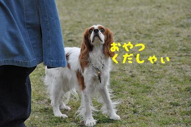 20090404_川原_12