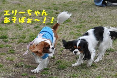 20090404_川原_13