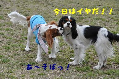 20090404_川原_15