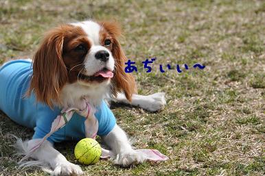 20090404_川原_18