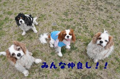 20090404_川原_20