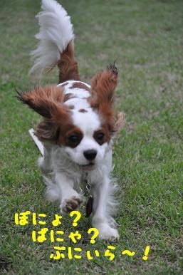 20090606_21