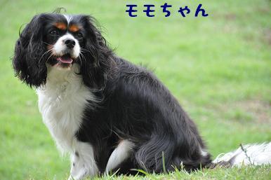 20090614_04