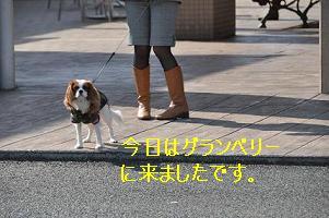 グランベリー社会勉強_01