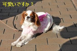 グランベリー社会勉強_07