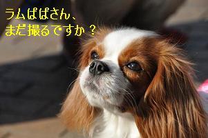 グランベリー社会勉強_09