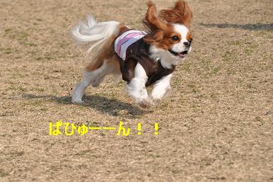 20090211_川原_11
