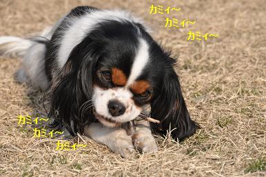 20090211_川原_14