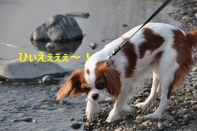 20090211_川原_20