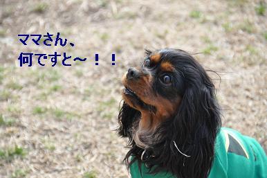 20090215_川原_04