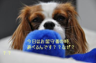 お留守番デビュー_01