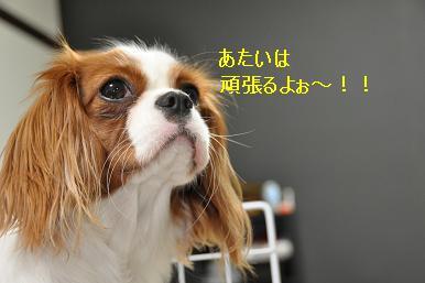 お留守番デビュー_09