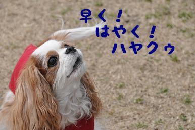 20090301_川原03