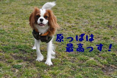 20090301_川原05