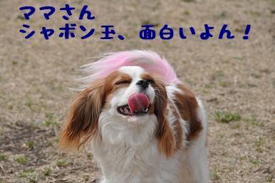 20090301_川原08