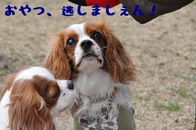 20090301_川原10