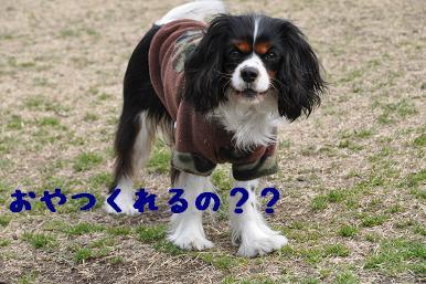 20090301_川原11