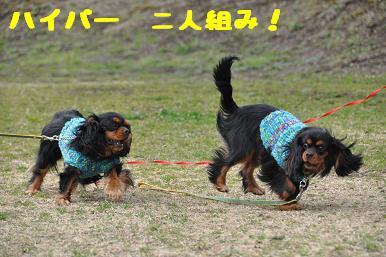 20090301_川原12