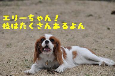 20090301_川原24