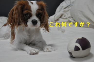 yuiさんのプレゼント09