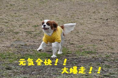20090307_川原_01